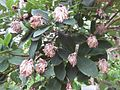 Gardenology.org-IMG 2248 rbgs11jan.jpg
