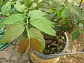 Gardenology.org-IMG 8009 qsbg11mar.jpg