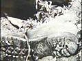 Garnett John Doe shoe.jpg