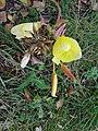 Gele Bloom 1 an'n Bullenbarg bi Nindörp 09.jpg