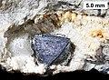 Geodized brachiopod.jpg