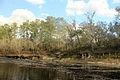 Gfp-florida-big-shaols-state-park-suwanee-river-shore.jpg