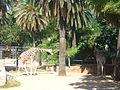 Girafes al Zoo - Barcelona.JPG
