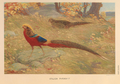 Golden Pheasant by Charles Knight.png
