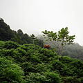Gonio landscape.jpg