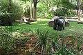 Gorila Zoo-Botânica de BH - MG.jpg