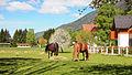 Gozd Martuljek - horses.jpg