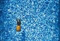 Grand Sirenis Riviera Maya Resort, Akumal, Mexico (Unsplash).jpg