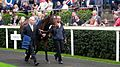 Great Heavens in the parade ring.jpg