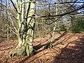 Great Kings Wood - geograph.org.uk - 668211.jpg