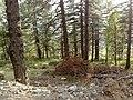 Greece - Grevena - Filippaioi - trees 03.jpg