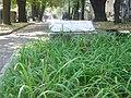 Grob Cvijica.jpg