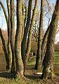 Grumbeckteich bb05.jpg
