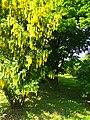 Gryshko botanical garden (May 2018) 16.jpg
