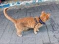 HK 觀塘 Kwun Tong 偉業街 Wai Yip Street brown cat evening June 2019 SSG 02.jpg