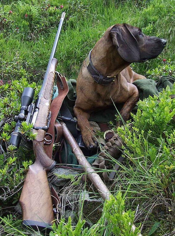Neodmysliteľným pomocníkom poľovníka je pes