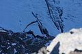 Hallstätter Gletscher5813.JPG