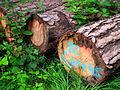 Hanau gefällte Bäume Juni 2012.JPG