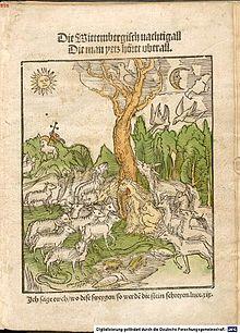 Die Wittembergisch Nachtigall, die man yetz höret uberall (1523) (Quelle: Wikimedia)