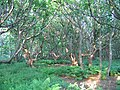 Harestanes Wood - geograph.org.uk - 16847.jpg