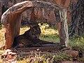 Harimau kepanasan.jpg