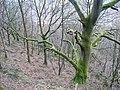 Hathershelf Scout Wood, Mytholmroyd - geograph.org.uk - 1200068.jpg