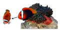 Head shaking movements displayed by Amphiprion frenatus subordinate while producing submissive sounds - journal.pone.0049179.g001B.png