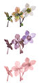 Helleborus niger Vis UV IR comparison.jpg