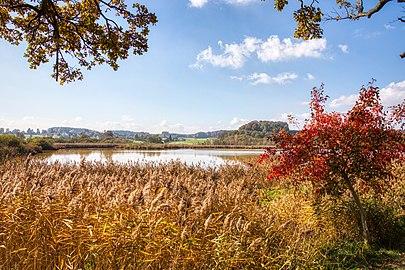 Herbst am Eggelburger See.jpg