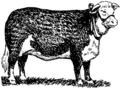 Hereford (PSF).png