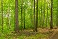 Herrnhut Naturschutzgebiet Hengstberg 07.jpg