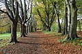 High Town Ward - Nov 2013 - People's Park - avenue of trees at the top.JPG