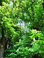 Hildesheim - panoramio (4).jpg