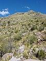 Hillside with Pre-Columbian Terracing - Shore of Lake Titicaca - Copacabana - Bolivia (3776988466).jpg