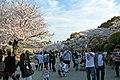 Himeji castle April 15.jpg
