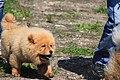 HiperParada animalelor la CORA (4552396024).jpg