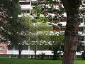 Hirzenbach Wohnhaus Bäume 2 2014-08-24.JPG