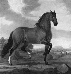 Hispanus Conquerant, en av kung Karl XI:s ridhästar