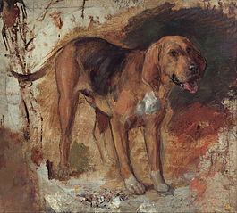 Study of a bloodhound