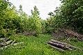 Horn-Bad-Meinberg - 2015-05-27 - LIP-060 Buchenwald bei Bellenberg (9).jpg