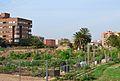 Horts urbans, Benimaclet.JPG