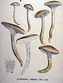 Hycrophorus eburneus — Flora Batava — Volume v20.jpg