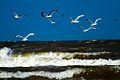 IJmuiden-beach-2013-25 (9043406805).jpg