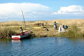 Uru people - Uros harvesting totora on Lake Titicaca nearby the city of Puno.