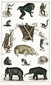 Illustration from A History of the Earth and Animated Nature by Oliver Goldsmith from rawpixel's own original edition of the publication 00077.jpg