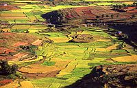 Imerina countryside riziere rice paddies Madagascar.jpg