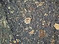 Impact breccia (Sandcherry Member, Onaping Formation, Paleoproterozoic, 1.85 Ga; High Falls roadcut, Sudbury Impact Structure, Ontario, Canada) 8 (47706704052).jpg