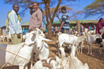 Improving livestock markets reduces the threat of conflict (8331351762).png