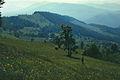 In the vicinity of Svedovet (1987). (15851005989).jpg