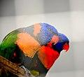Indian Birds.jpg